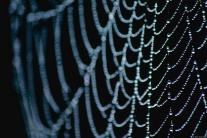 The Web.