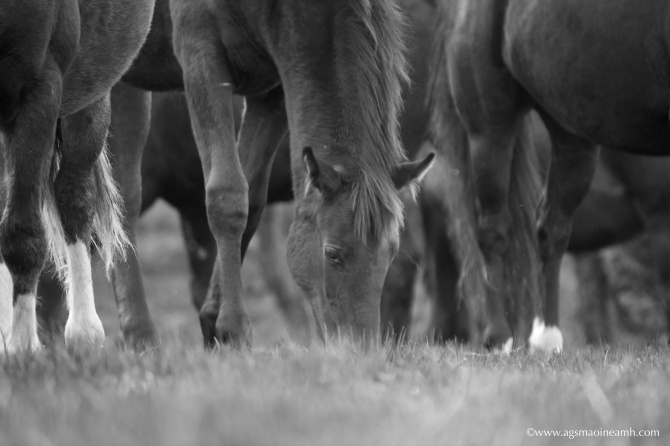 Equine legs