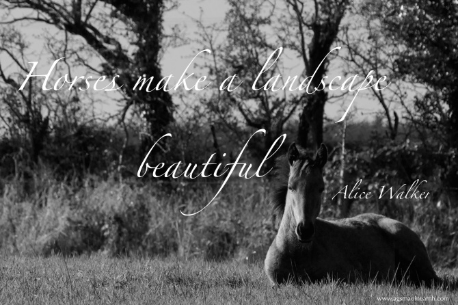 Horses make a landscape beautiful, Alice Walker. © Julie Corcoran (agsmaoineamh.com)