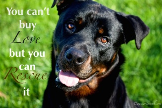 You can't by love, but you can rescue it. ©agsmaoineamh.com