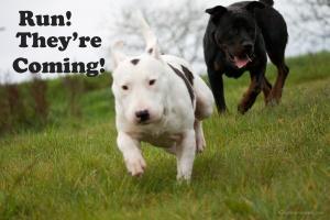 Run! They're coming! ©agsmaoineamh.com