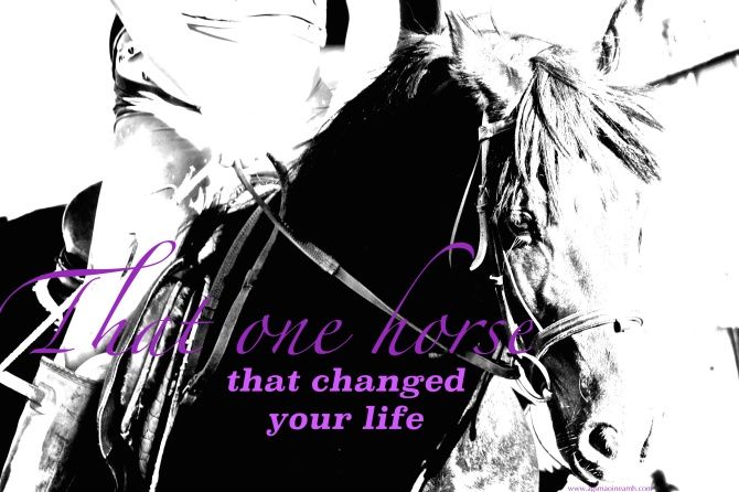 That one horse that changed your life.
