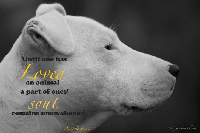 Until one has loved as animal a part of ones' soul remains unawakened. Anatole France.