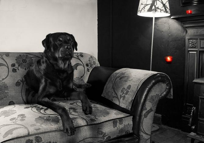 Rocky Levitating black and white
