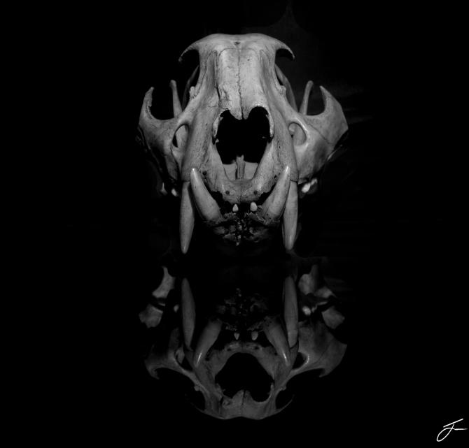 Skull gd bw