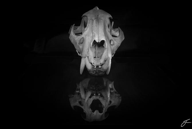 Skull gd