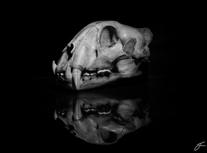 Skull side bw
