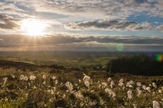 Kells Hay Festival